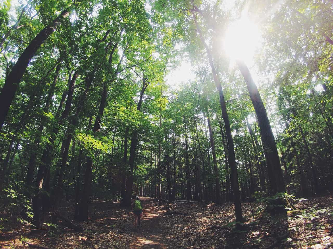 forest hike